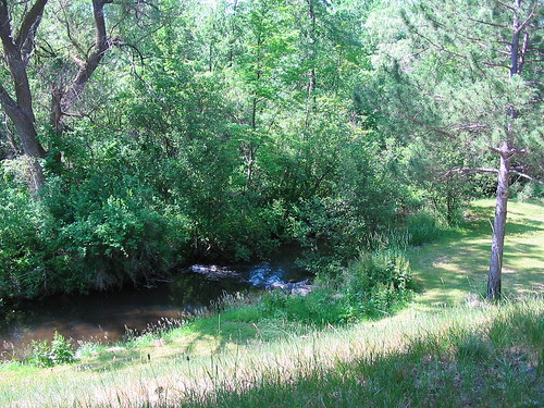 Little Manistee River, near Luther