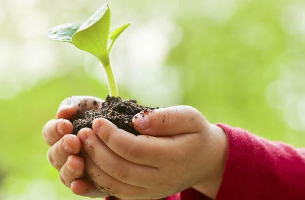 Cidades brasileiras têm lei que incentiva o plantio de árvore a cada novo bebê