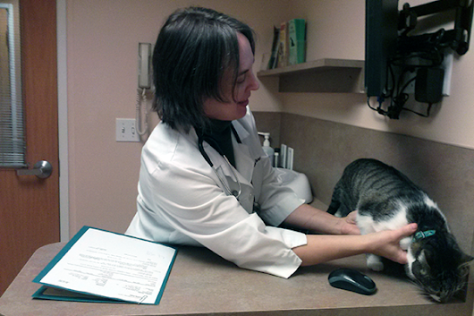 7 Reasons You Need to Take Your Cat to the Vet Regularly | Catster