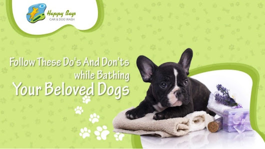 Follow these do's and don'ts while bathing your beloved dogs