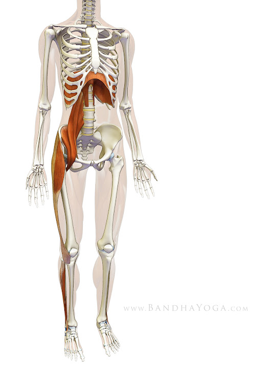 Sankalpa, Visualization and Yoga: The Diaphragm-Psoas Connection