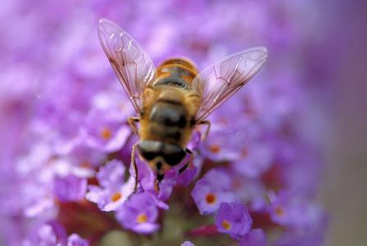 Somerset bee keeper condemns NFU use of insecticides