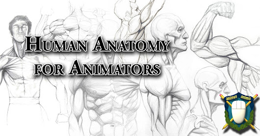 Anatomy For Animators 02 - Anatomical Movement