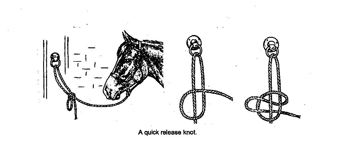 Image result for quick release knots