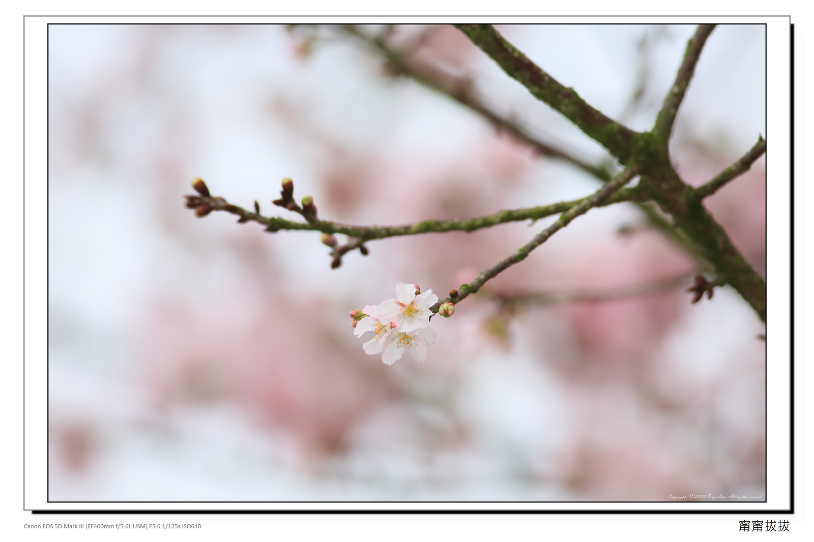 frame_BING8581