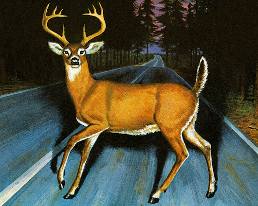 THE DEER IN HEADLIGHT SYNDROME