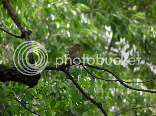 photo birdintree.jpg