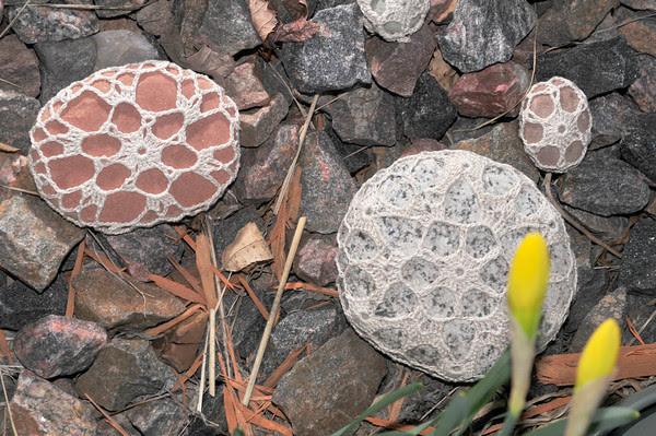 Humboldt Snowflake Rocks