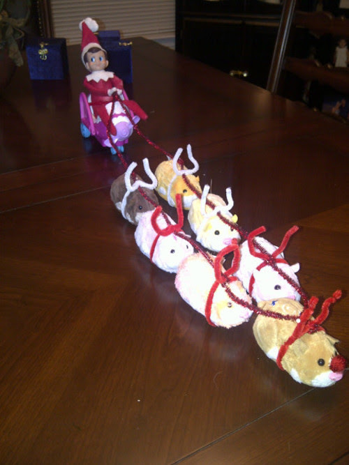 Elf with Zhu-Zhu Pet Reindeer When short on reindeer…why not?