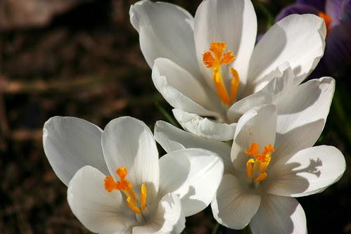 Spring Wonders