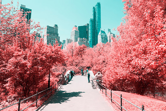 New York's Central Park Transformed Into Breathtaking Infrared Landscape