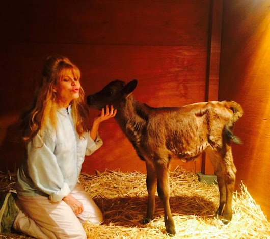 "Charo Credits ABC's ""Celebrity Wife Swap"" with Saving the Life of Her Beloved Calf 