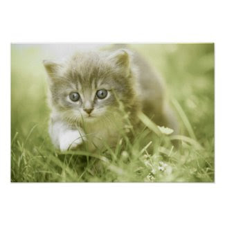 Kitten taking steps in the grass poster