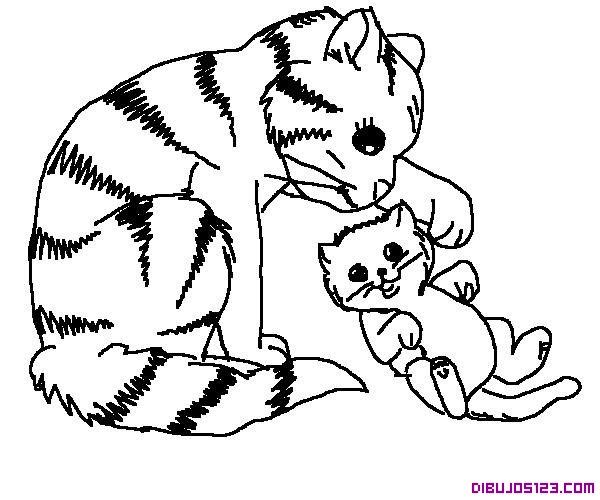 Tiernos Gatitos Jugando