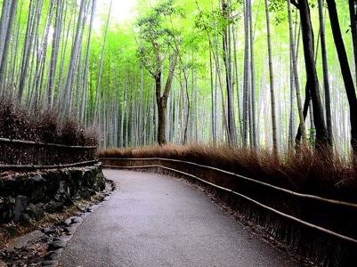 Japanese Tourist Spots You Don't Want To Miss