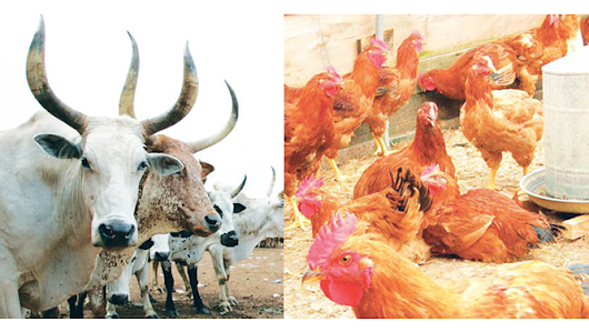 Livestock imports ban as elixir to conserving forex - New Telegraph Newspapers