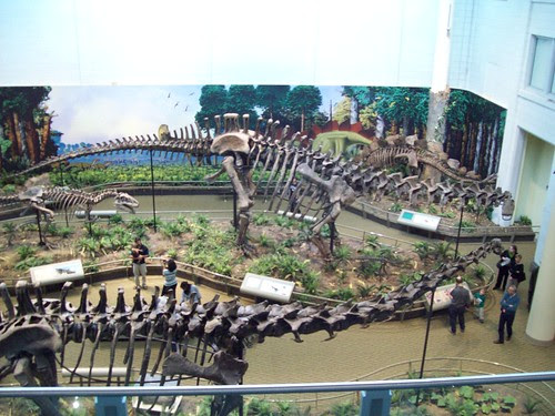 CMNH: Overlooking the Dinosaurs