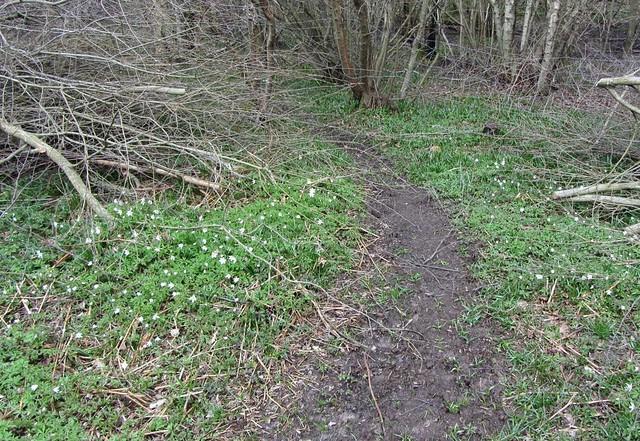 IMG_3360 wild boar trail