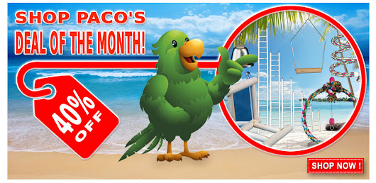 February Deal of the Month – Paco Parrot's Blog