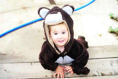little bear soon to be ewok