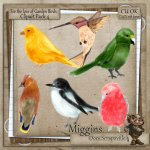 CU Hand Drawn For the love of Garden Birds Clipart 4