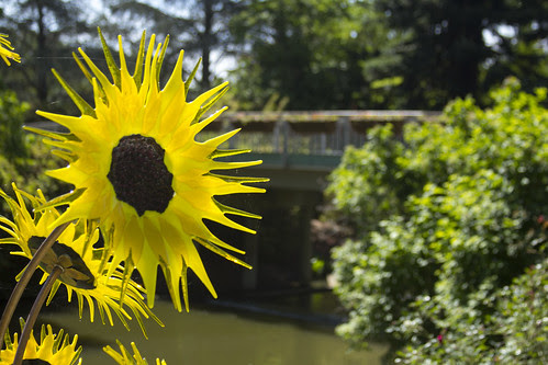 Glass Sunflower by bahayla