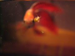 Henry and two baby snails