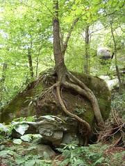 Tree Atop a Rock