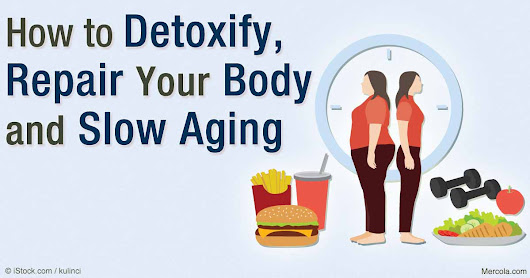 Autophagy—How Your Body Detoxifies and Repairs Itself