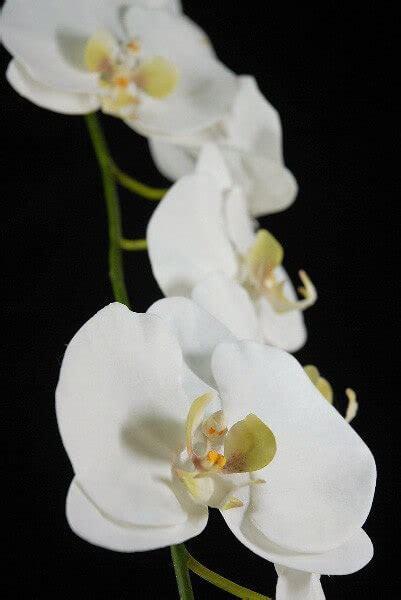 Silk Orchid Branch Phaleanopsis White 53in
