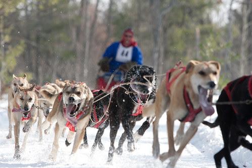 dog sled-19