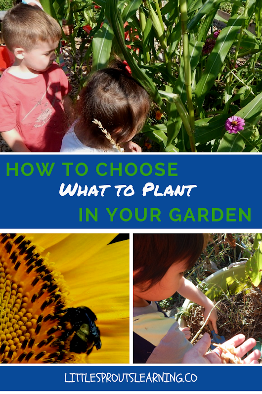 How to Choose What to Plant - Little Sprouts Learning