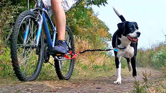 DoggerJogger, The Simple Way to Combine Exercise and Pet Care