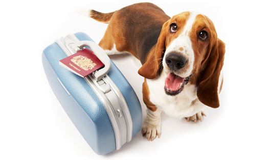 What You Need to Know About Moving Pets Overseas - GoodMigrations