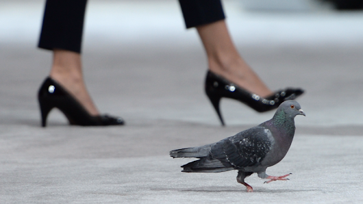 Homing Pigeon Caught Carrying Nearly 200 Ecstasy Pills On Its Back  | LADbible
