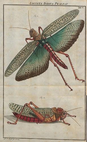 Locusta Indica praefat V.2