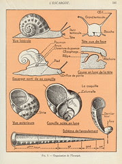 scnat escargot