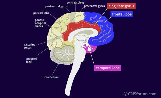 Medical Pharmacology: Drugs Used to Manage Depression