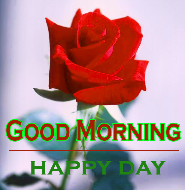 Morning Wishes Images With Red Rose 4