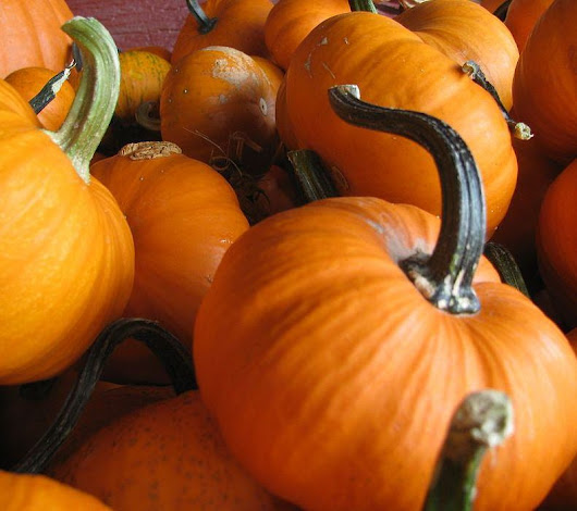 15 Cities With Family-Friendly Activities for Halloween 2014