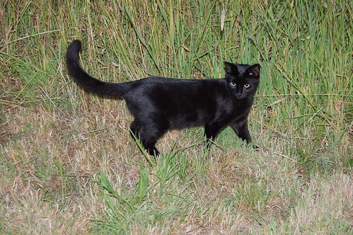 crow in the long grass