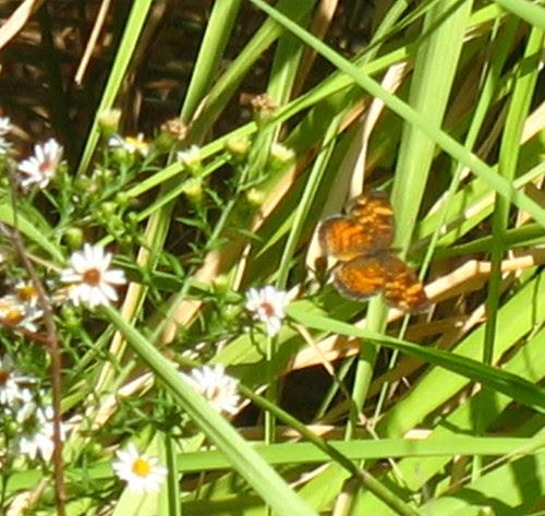 nature notes mothflas