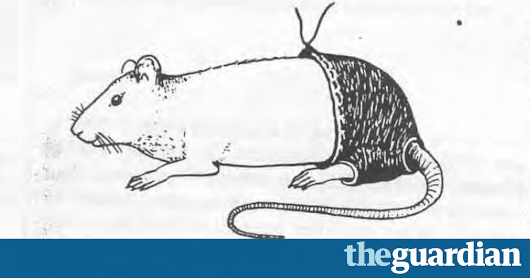 Ig Nobel prizes: trousers for rats and the truthfulness of liars | Science | The Guardian
