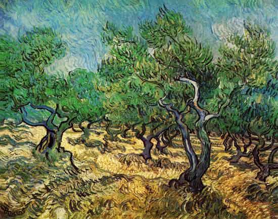 Vincent Van Gogh - Olive grove