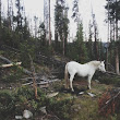 Stunning iPhone Photos of the American West by Kevin Russ