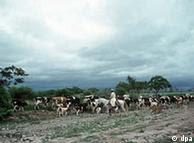 Cría de ganado en la provincia de Córdoba, Argentina.