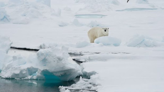 The Arctic just had its warmest year on record 'by far,' scientists report
