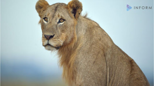 Researchers find hidden lion population in East Africa - CSMonitor.com