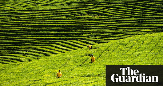 Green tea may help reduce risk of heart attacks | Science | The Guardian