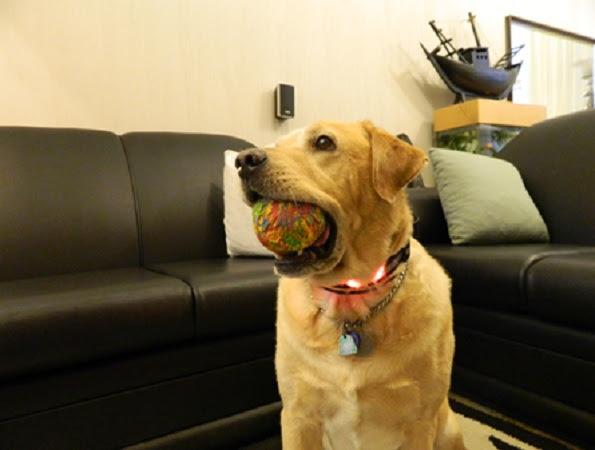 Jimmy Prates - cão-guia